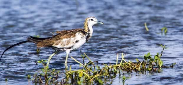 Oman Birding Tour